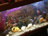 Продам аквариум 500л с рыбами