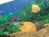 Продам панорамный аквариум тумбой